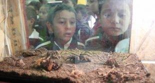 Ofrece exposición Aracno en el ZigZag oportunidad de que Zacatecano se aorendan y vivan una experiencia emocionante