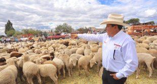 Da inicio David Monreal a la entrega de ganado ovino y caprino del Crédito Ganadero a la Palabra para apoyar a mujeres productoras