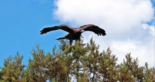 Piden declaratoria de Área Natural Protegida y Santuario del Águila Real para Monte Escobedo